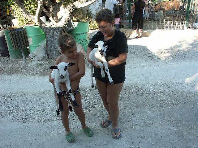 Animales y borreguitos